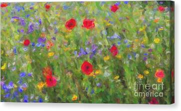 A Splash Of Summer Colour Canvas Print by Tim Gainey