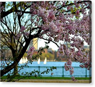 A Spring Day On The Charles River Canvas Print by Toby McGuire