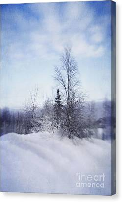 A Tree In The Cold Canvas Print by Priska Wettstein