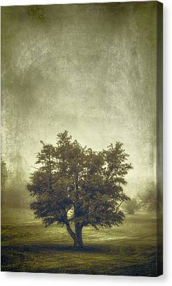 A Tree In The Fog 2 Canvas Print by Scott Norris