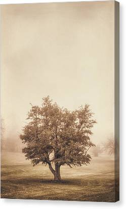 A Tree In The Fog Canvas Print by Scott Norris