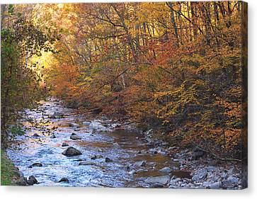 A Tunnell Of Fall Colors Canvas Print by Patricia Twardzik