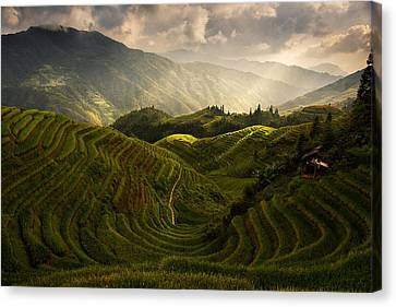 A Tuscan Feel In China Canvas Print by Max Witjes