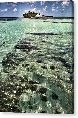 A View Of Thatch Island Canvas Print by Amy Manley
