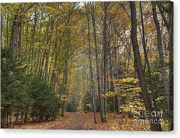 A Walk In The Woods II Canvas Print by Michele Steffey