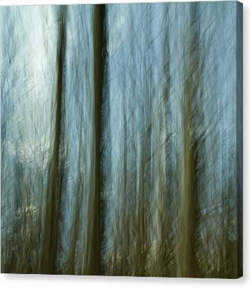 A Walk In The Woods IIi Canvas Print by Bob Retnauer