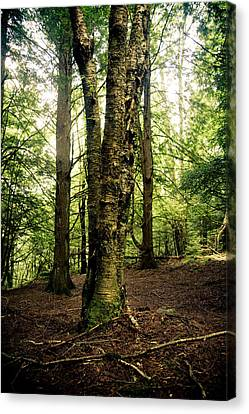 A Walk In The Woods Canvas Print by Shane Holsclaw