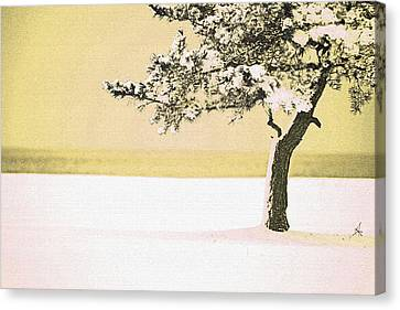 A Winter Moment Canvas Print by Karol Livote