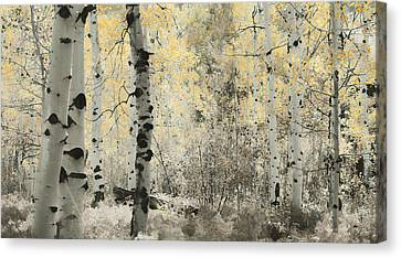 A Wisp Of Gold Canvas Print by Don Schwartz