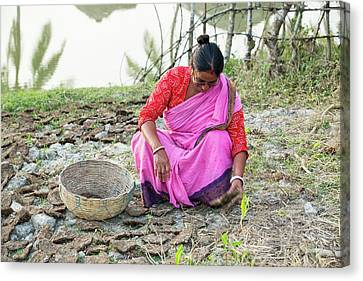 A Woman Collecting Dried Cow Dung Canvas Print by Ashley Cooper