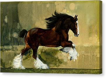 Clydesdale Stallion Canvas Print by Don  Langeneckert