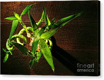 Above The Bamboo Canvas Print by Olivier Le Queinec