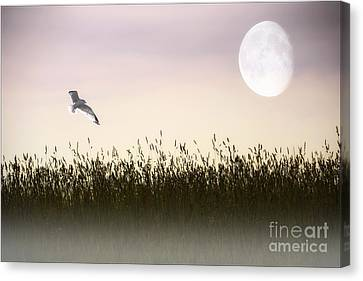 Above The Tall Grass Canvas Print by Tom York Images