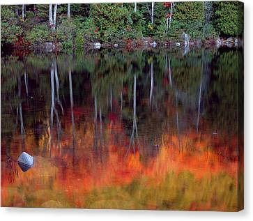 Acadia National Park, Maine Canvas Print by Scott T. Smith