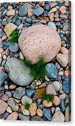 Acadia Rocks 5506 Canvas Print by Brent L Ander