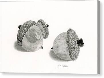 Acorns- Black And White Canvas Print by Sarah Batalka