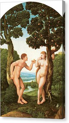 Adam And Eve Canvas Print by Jan Van Scorel