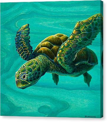 Aeko Sea Turtle Canvas Print by Emily Brantley