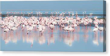 Africa, Namibia, Walvis Bay Canvas Print by Jaynes Gallery