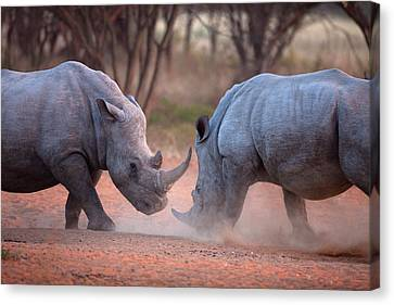 Africa, Namibia White Rhinos Fighting Canvas Print by Jaynes Gallery
