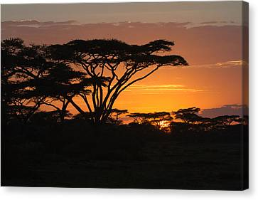 African Sunset Canvas Print by Christa Niederer