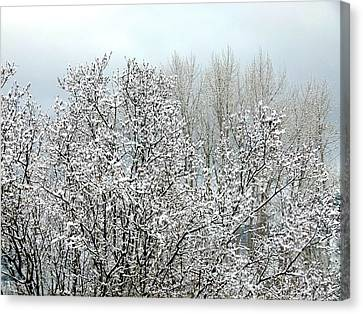 After A Light Snowfall Canvas Print by Will Borden