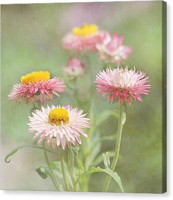 Afternoon Delight Canvas Print by Kim Hojnacki