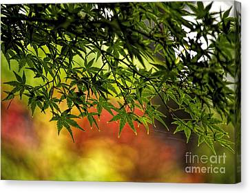 Afternoon Glow Canvas Print by Peggy Hughes