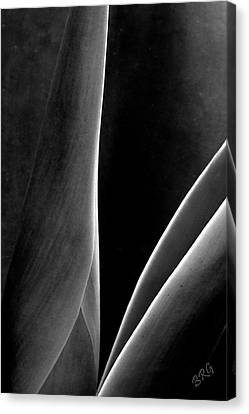 Agave Canvas Print by Ben and Raisa Gertsberg