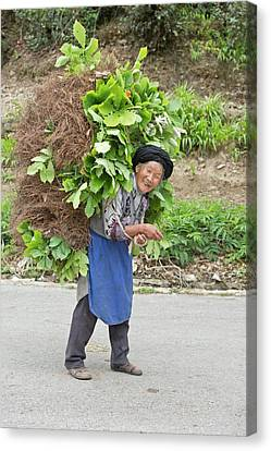 Aged Female Tibetan Subsistence Farmer Canvas Print by Tony Camacho