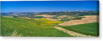 Agricultural Fields, Ronda, Malaga Canvas Print by Panoramic Images