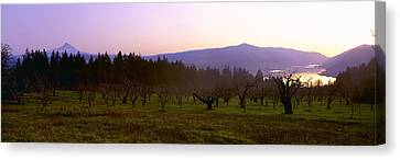 Agriculture - Dormant Pear Orchard Canvas Print by Charles Blakeslee