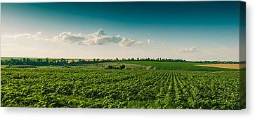 Agriculture Field And Perfect Sky Canvas Print by Daniel Barbalata