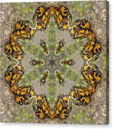 Alabama Box Turtle Kaleidoscope - Terrapene Carolina Canvas Print by Kathy Clark