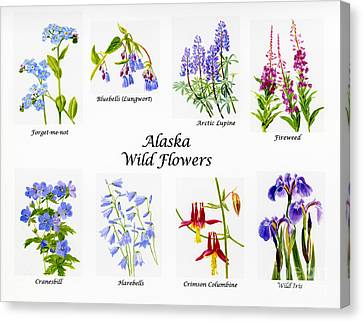 Alaska Wild Flower Poster Canvas Print by Sharon Freeman