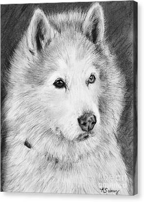 Alaskan Malamute Drawing Mardi Canvas Print by Kate Sumners