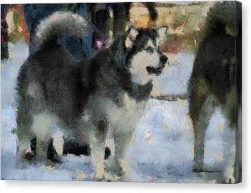 Alaskan Malamute Photo Art 03 Canvas Print by Thomas Woolworth