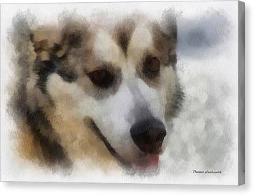 Alaskan Malamute Photo Art 08 Canvas Print by Thomas Woolworth
