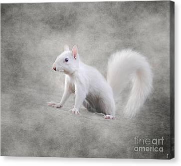 Albino Squirrel Canvas Print by Jai Johnson