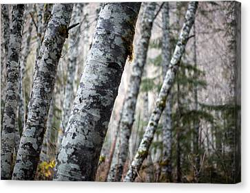 Alder Forest Leaning Canvas Print by Mike Reid