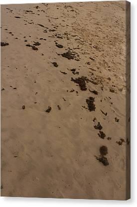 Algae Trail In The Sand Canvas Print by Sandra Pena de Ortiz