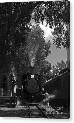 All Aboard Canvas Print by Wildlife Fine Art