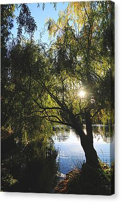 All Aglow Canvas Print by Laurie Search