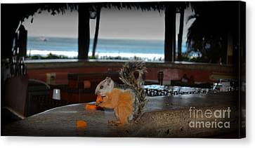All Inclusive Squirrel Canvas Print by Gary Keesler