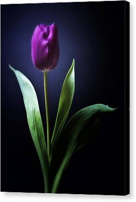 Black And White Purple Tulips Flowers Art Work Photography Canvas Print by Artecco Fine Art Photography