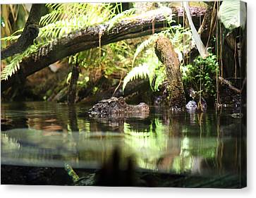 Alligator - National Aquarium In Baltimore Md - 12124 Canvas Print by DC Photographer