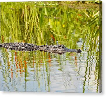 Alligator Reflection Canvas Print by Al Powell Photography USA
