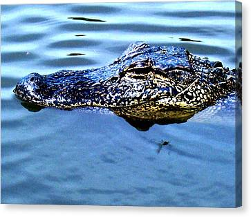 Alligator With Spider Canvas Print by Robin Lewis