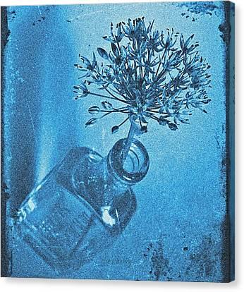 Allium Cyanotype Canvas Print by Chris Berry