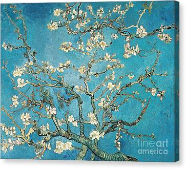 Almond Branches In Bloom Canvas Print by Vincent van Gogh